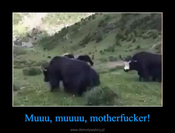 Muuu, muuuu, motherfucker! –