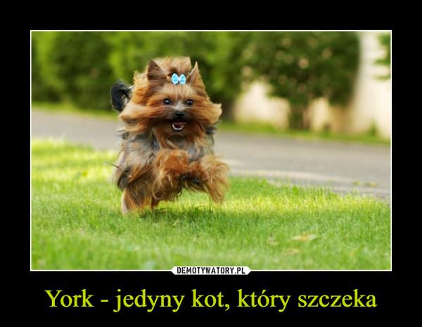 York - jedyny kot, który szczeka –