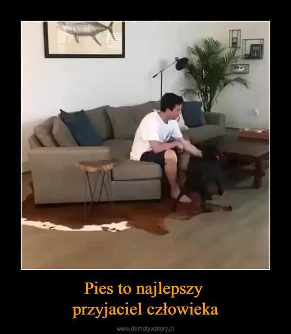 Pies to najlepszy przyjaciel człowieka –