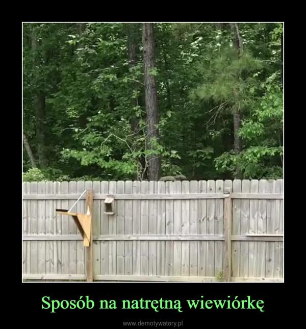 Sposób na natrętną wiewiórkę –