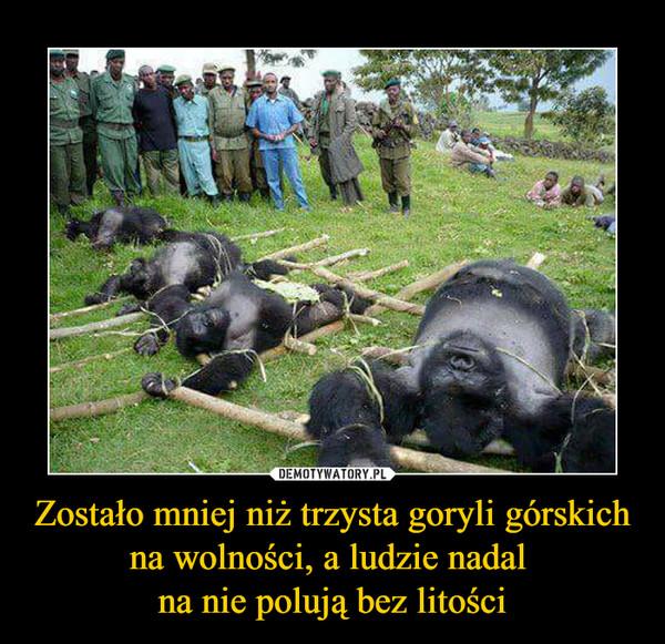Zostało mniej niż trzysta goryli górskich na wolności, a ludzie nadal na nie polują bez litości –