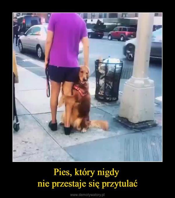 Pies, który nigdy nie przestaje się przytulać –