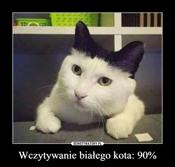 Wczytywanie białego kota: 90% –