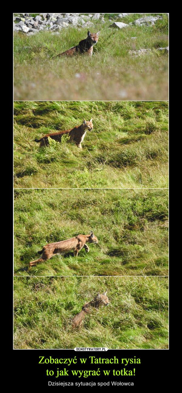 Zobaczyć w Tatrach rysia to jak wygrać w totka! – Dzisiejsza sytuacja spod Wołowca