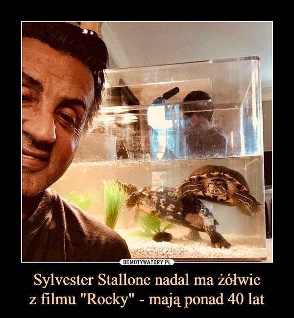"""Sylvester Stallone nadal ma żółwiez filmu """"Rocky"""" - mają ponad 40 lat –"""