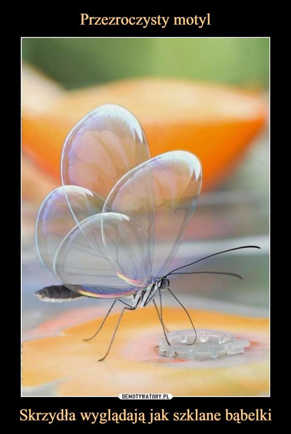 Skrzydła wyglądają jak szklane bąbelki –