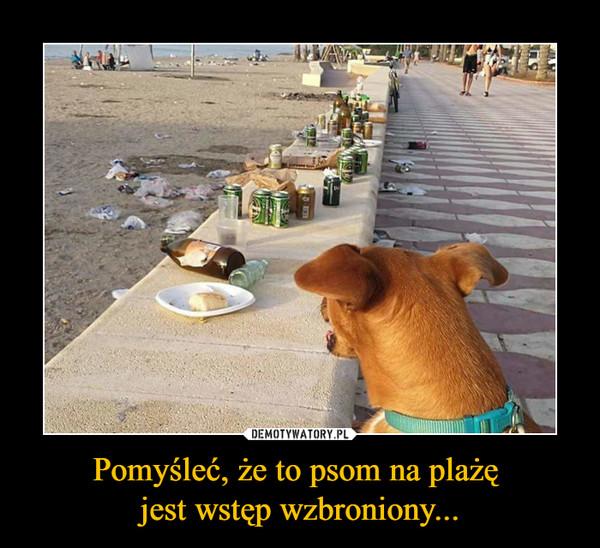 Pomyśleć, że to psom na plażę jest wstęp wzbroniony... –