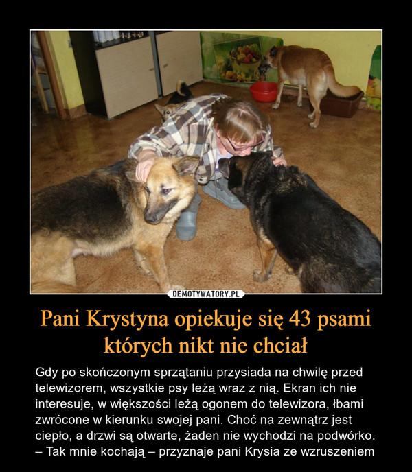 Pani Krystyna opiekuje się 43 psami których nikt nie chciał – Gdy po skończonym sprzątaniu przysiada na chwilę przed telewizorem, wszystkie psy leżą wraz z nią. Ekran ich nie interesuje, w większości leżą ogonem do telewizora, łbami zwrócone w kierunku swojej pani. Choć na zewnątrz jest ciepło, a drzwi są otwarte, żaden nie wychodzi na podwórko. – Tak mnie kochają – przyznaje pani Krysia ze wzruszeniem