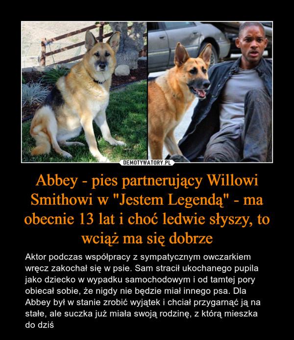 """Abbey - pies partnerujący Willowi Smithowi w """"Jestem Legendą"""" - ma obecnie 13 lat i choć ledwie słyszy, to wciąż ma się dobrze – Aktor podczas współpracy z sympatycznym owczarkiem wręcz zakochał się w psie. Sam stracił ukochanego pupila jako dziecko w wypadku samochodowym i od tamtej pory obiecał sobie, że nigdy nie będzie miał innego psa. Dla Abbey był w stanie zrobić wyjątek i chciał przygarnąć ją na stałe, ale suczka już miała swoją rodzinę, z którą mieszka do dziś"""