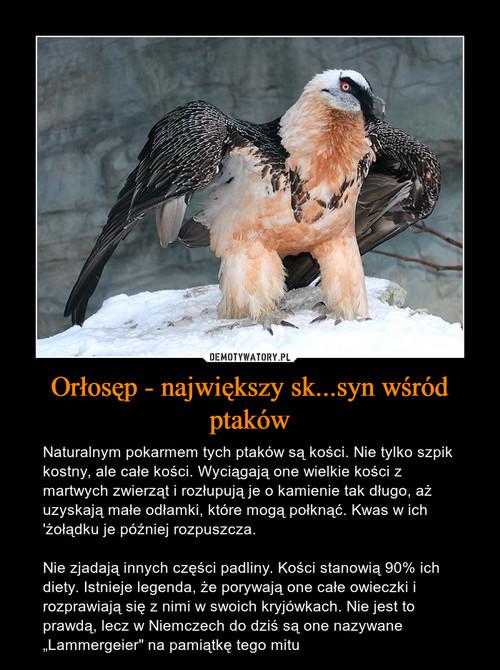 Orłosęp - największy sk...syn wśród ptaków