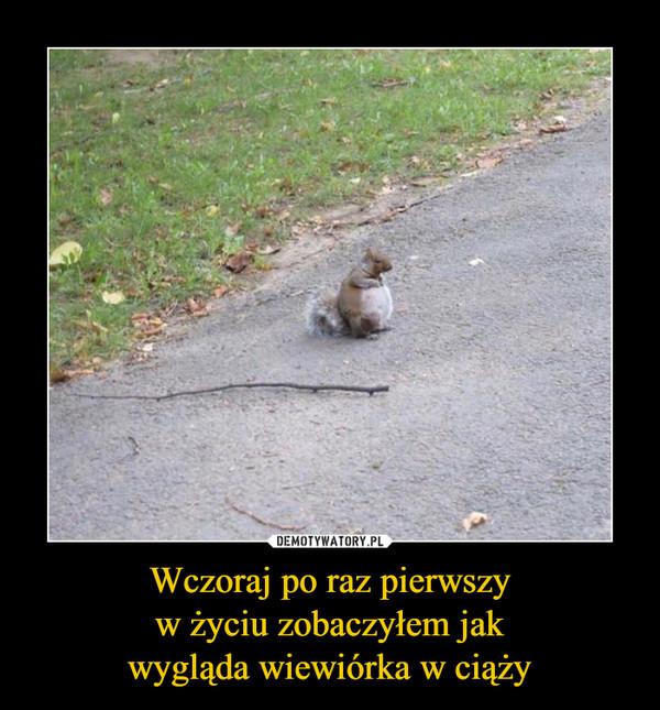 Wczoraj po raz pierwszyw życiu zobaczyłem jakwygląda wiewiórka w ciąży –