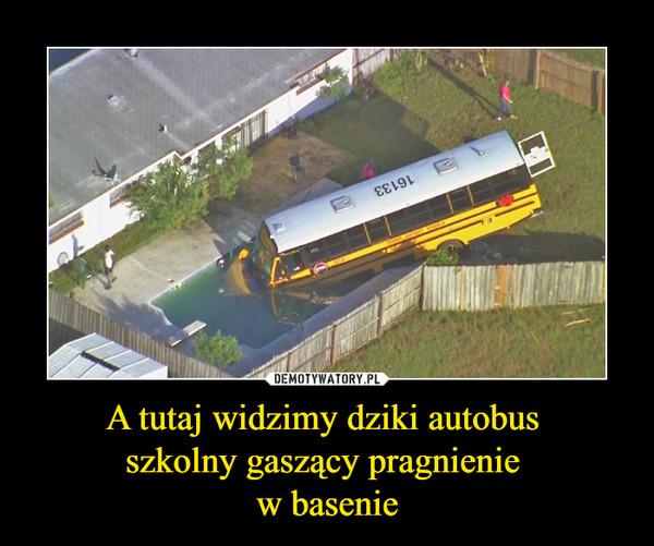 A tutaj widzimy dziki autobus szkolny gaszący pragnienie w basenie –