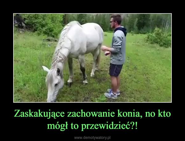 Zaskakujące zachowanie konia, no kto mógł to przewidzieć?! –