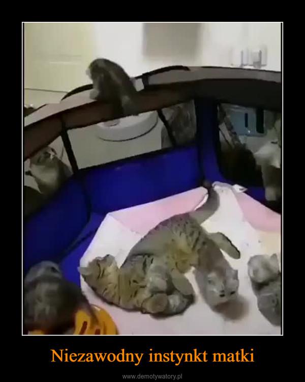 Niezawodny instynkt matki –