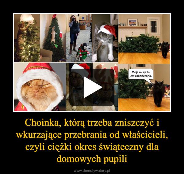 Choinka, którą trzeba zniszczyć i wkurzające przebrania od właścicieli, czyli ciężki okres świąteczny dla domowych pupili –
