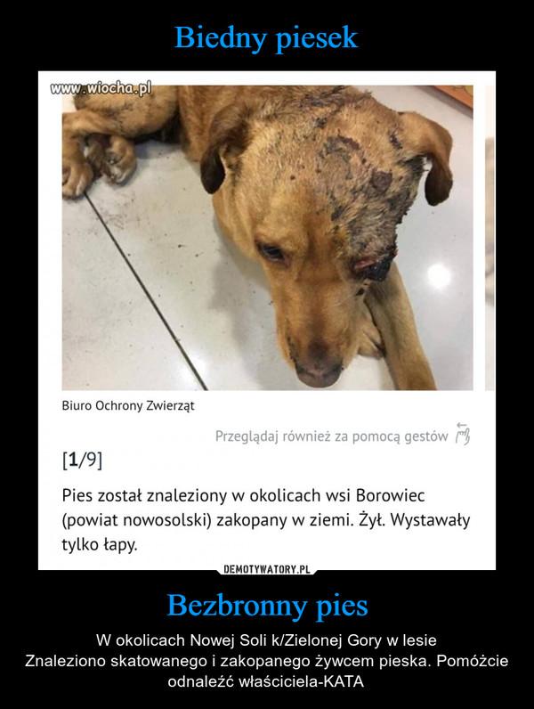 Bezbronny pies – W okolicach Nowej Soli k/Zielonej Gory w lesieZnaleziono skatowanego i zakopanego żywcem pieska. Pomóżcie odnaleźć właściciela-KATA