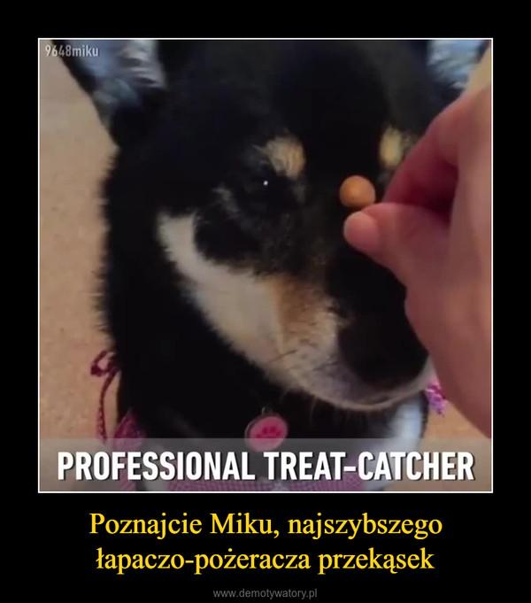 Poznajcie Miku, najszybszego łapaczo-pożeracza przekąsek –