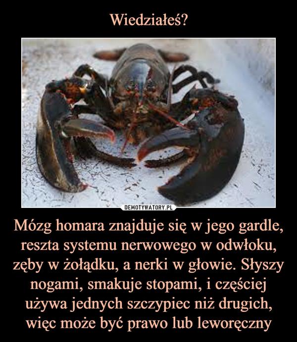 Mózg homara znajduje się w jego gardle, reszta systemu nerwowego w odwłoku, zęby w żołądku, a nerki w głowie. Słyszy nogami, smakuje stopami, i częściej używa jednych szczypiec niż drugich, więc może być prawo lub leworęczny –