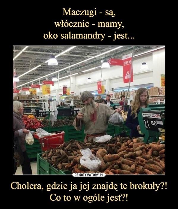 Cholera, gdzie ja jej znajdę te brokuły?! Co to w ogóle jest?! –
