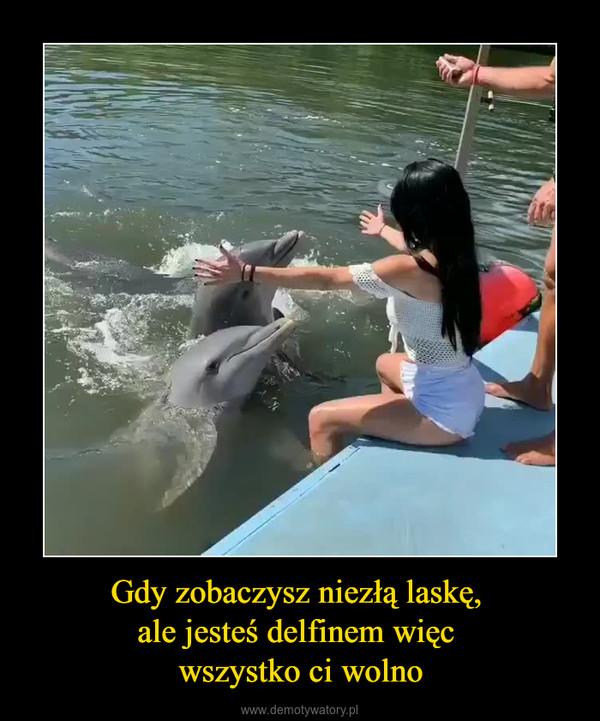 Gdy zobaczysz niezłą laskę, ale jesteś delfinem więc wszystko ci wolno –