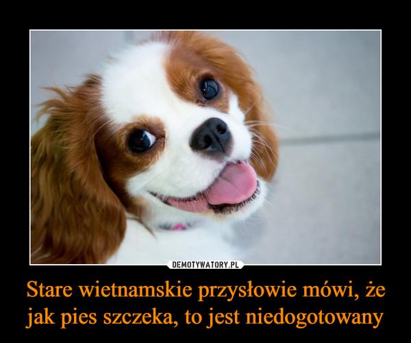 Stare wietnamskie przysłowie mówi, że jak pies szczeka, to jest niedogotowany –