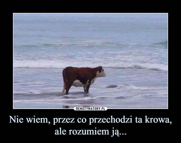 Nie wiem, przez co przechodzi ta krowa, ale rozumiem ją...