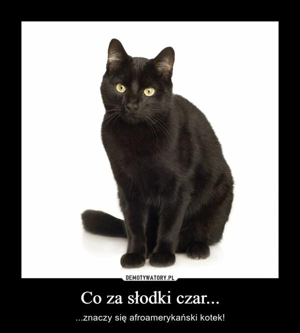Co za słodki czar... – ...znaczy się afroamerykański kotek!