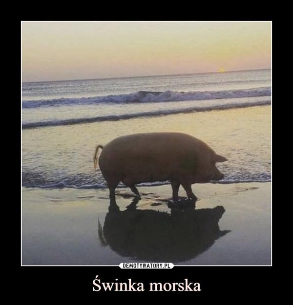 Świnka morska –