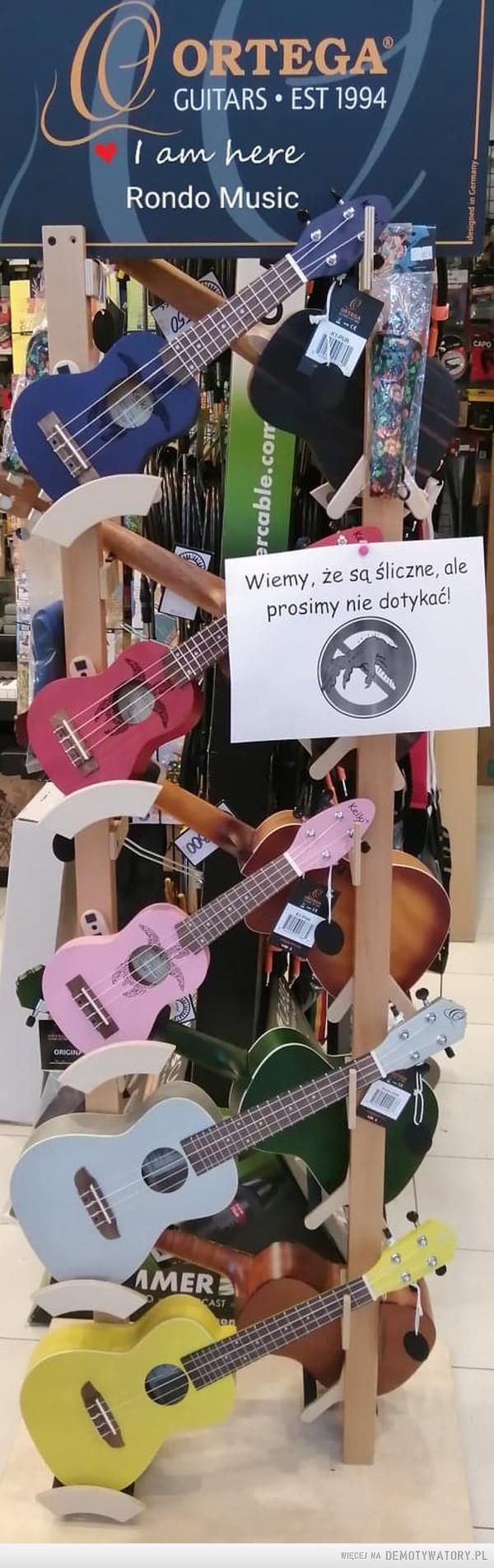 Każdy zakaz ma swoją historię – W jednym ze sklepów muzycznych na Śląsku