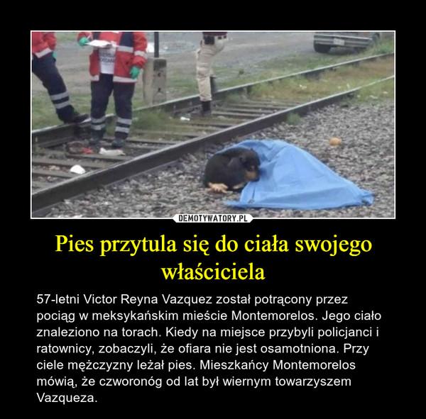 Pies przytula się do ciała swojego właściciela – 57-letni Victor Reyna Vazquez został potrącony przez pociąg w meksykańskim mieście Montemorelos. Jego ciało znaleziono na torach. Kiedy na miejsce przybyli policjanci i ratownicy, zobaczyli, że ofiara nie jest osamotniona. Przy ciele mężczyzny leżał pies. Mieszkańcy Montemorelos mówią, że czworonóg od lat był wiernym towarzyszem Vazqueza.