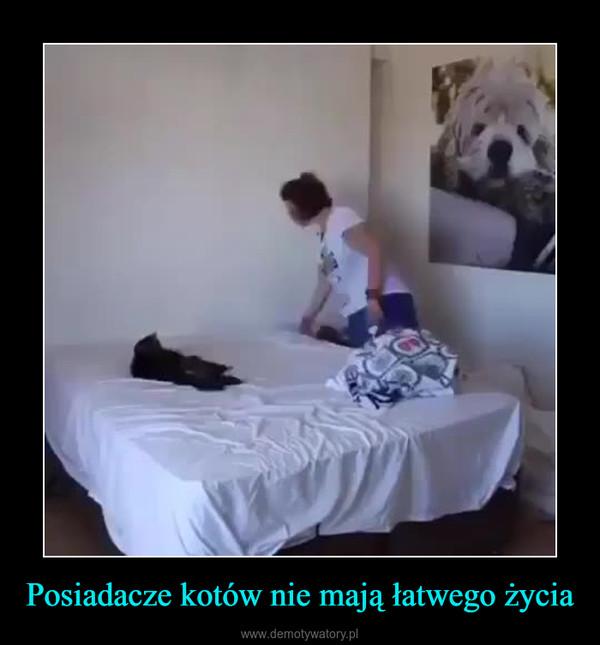 Posiadacze kotów nie mają łatwego życia –