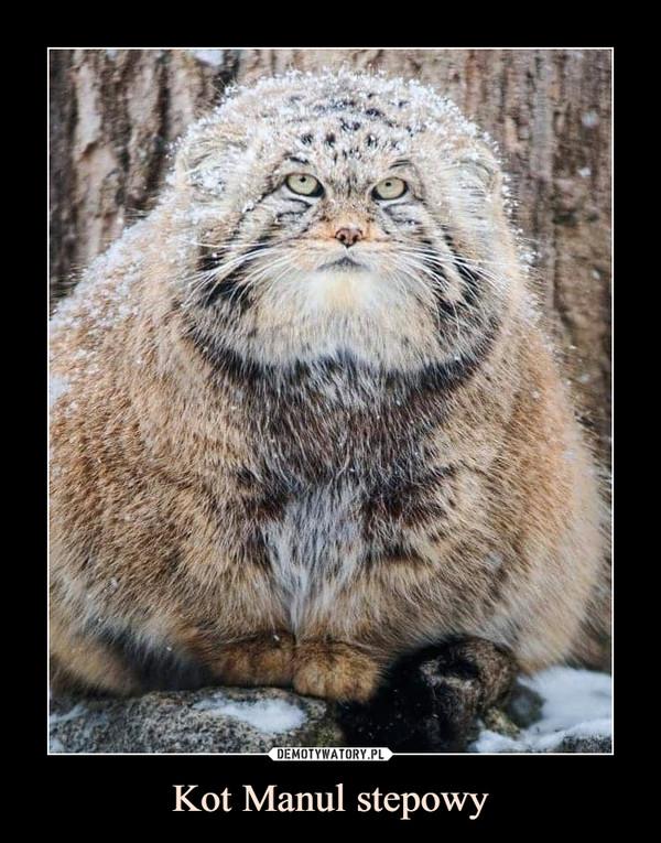 Kot Manul stepowy –
