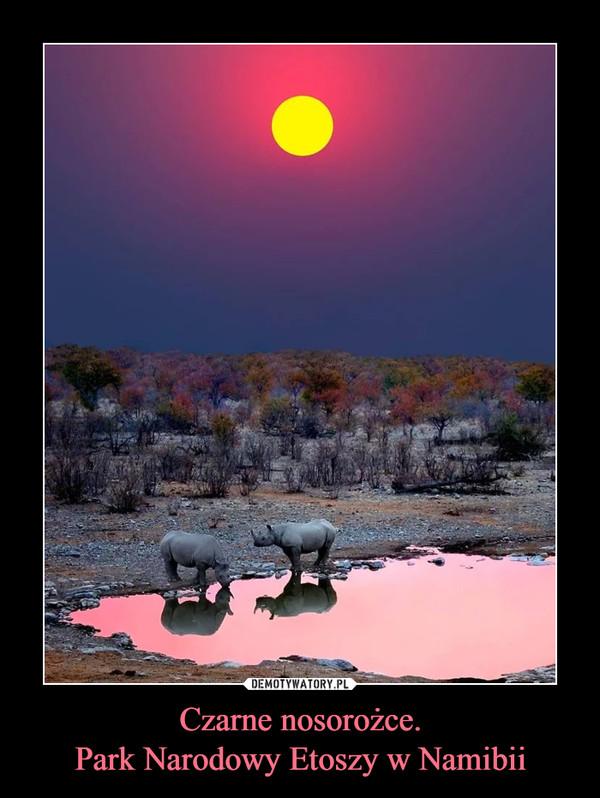 Czarne nosorożce.Park Narodowy Etoszy w Namibii –