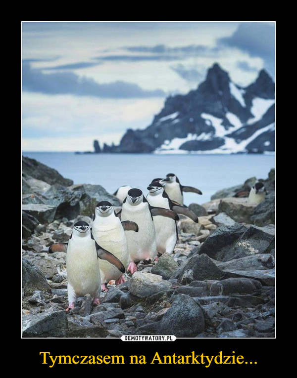 Tymczasem na Antarktydzie... –