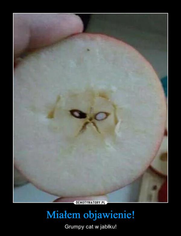 Miałem objawienie! – Grumpy cat w jabłku!