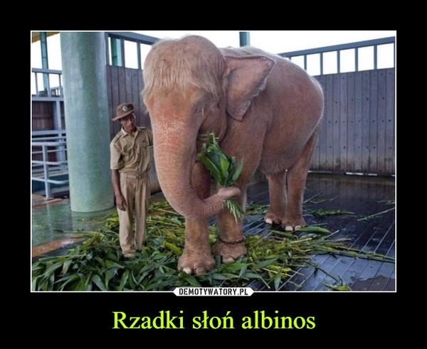 Rzadki słoń albinos –