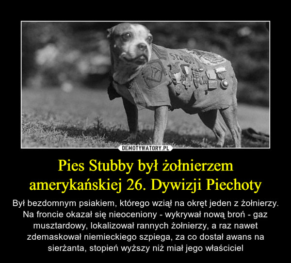Pies Stubby był żołnierzem amerykańskiej 26. Dywizji Piechoty – Był bezdomnym psiakiem, którego wziął na okręt jeden z żołnierzy. Na froncie okazał się nieoceniony - wykrywał nową broń - gaz musztardowy, lokalizował rannych żołnierzy, a raz nawet zdemaskował niemieckiego szpiega, za co dostał awans na sierżanta, stopień wyższy niż miał jego właściciel