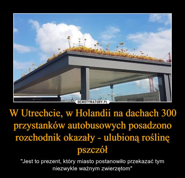 """W Utrechcie, w Holandii na dachach 300 przystanków autobusowych posadzono rozchodnik okazały - ulubioną roślinę pszczół – """"Jest to prezent, który miasto postanowiło przekazać tym niezwykle ważnym zwierzętom"""""""