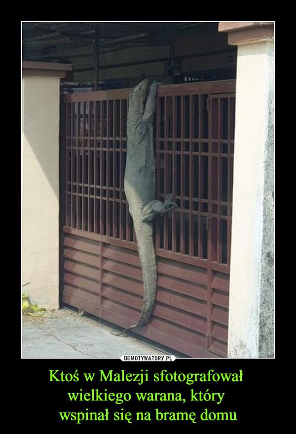 Ktoś w Malezji sfotografował wielkiego warana, który wspinał się na bramę domu –