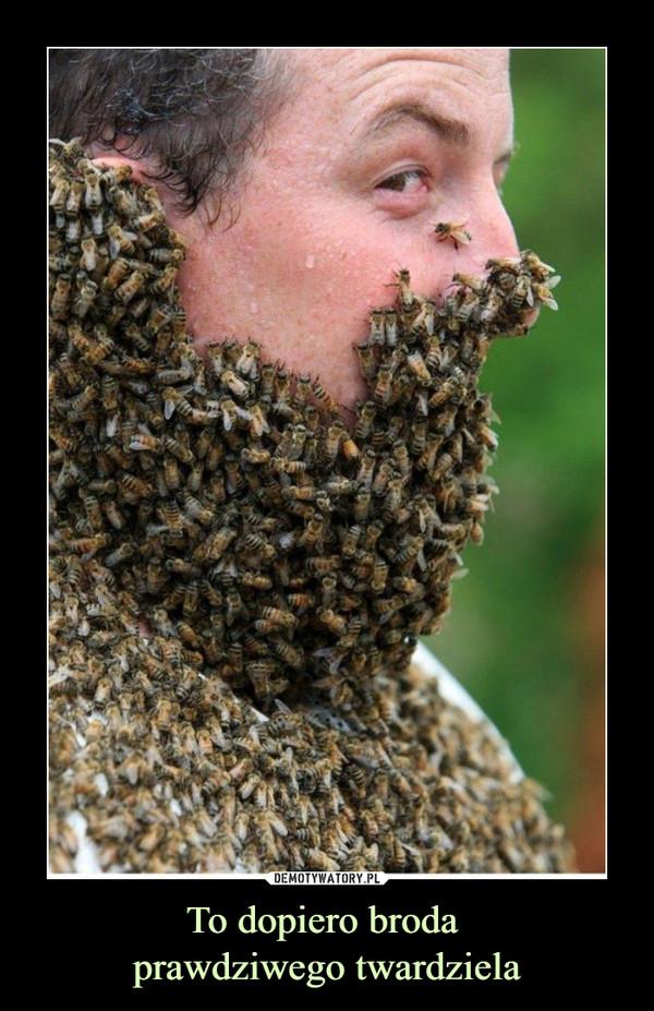 To dopiero broda prawdziwego twardziela –