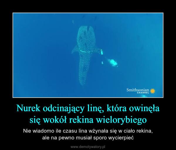 Nurek odcinający linę, która owinęłasię wokół rekina wielorybiego – Nie wiadomo ile czasu lina wżynała się w ciało rekina,ale na pewno musiał sporo wycierpieć