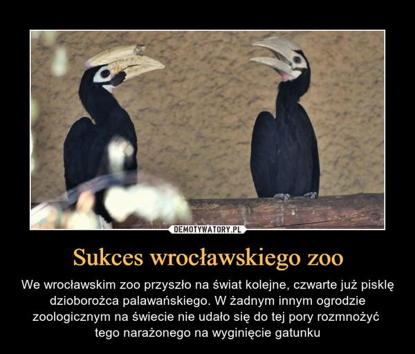 Sukces wrocławskiego zoo – We wrocławskim zoo przyszło na świat kolejne, czwarte już pisklę dzioborożca palawańskiego. W żadnym innym ogrodzie zoologicznym na świecie nie udało się do tej pory rozmnożyć tego narażonego na wyginięcie gatunku