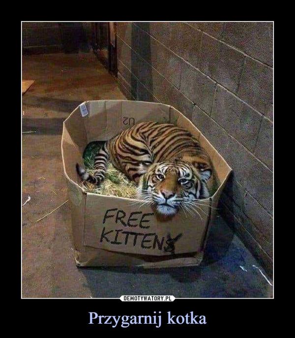 Przygarnij kotka –  FREE KITTEN