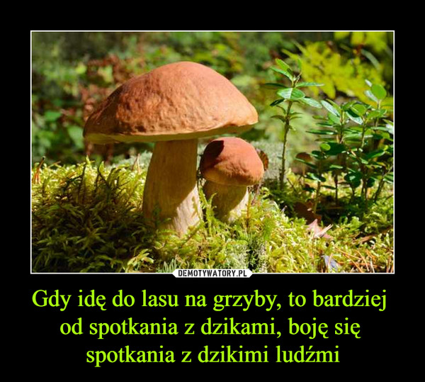 Gdy idę do lasu na grzyby, to bardziej od spotkania z dzikami, boję się spotkania z dzikimi ludźmi –