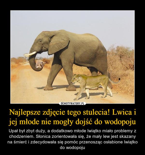 Najlepsze zdjęcie tego stulecia! Lwica i jej młode nie mogły dojść do wodopoju – Upał był zbyt duży, a dodatkowo młode lwiątko miało problemy z chodzeniem. Słonica zorientowała się, że mały lew jest skazany na śmierć i zdecydowała się pomóc przenosząc osłabione lwiątko do wodopoju