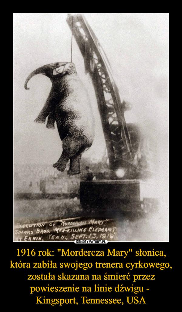 """1916 rok: """"Mordercza Mary"""" słonica, która zabiła swojego trenera cyrkowego, została skazana na śmierć przez powieszenie na linie dźwigu - Kingsport, Tennessee, USA –"""