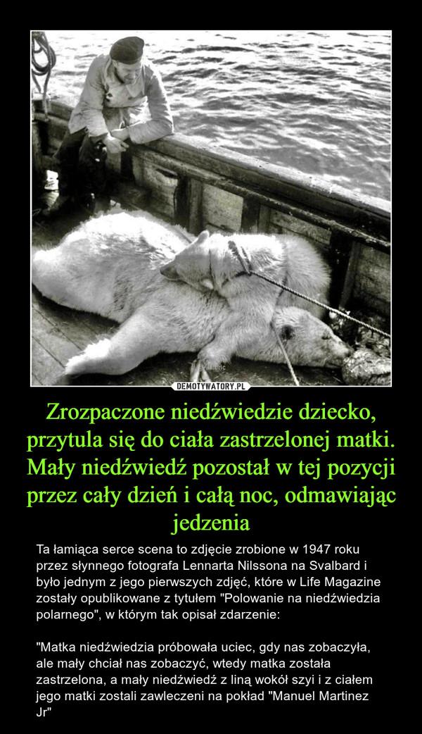 """Zrozpaczone niedźwiedzie dziecko, przytula się do ciała zastrzelonej matki. Mały niedźwiedź pozostał w tej pozycji przez cały dzień i całą noc, odmawiając jedzenia – Ta łamiąca serce scena to zdjęcie zrobione w 1947 roku przez słynnego fotografa Lennarta Nilssona na Svalbard i było jednym z jego pierwszych zdjęć, które w Life Magazine zostały opublikowane z tytułem """"Polowanie na niedźwiedzia polarnego"""", w którym tak opisał zdarzenie: """"Matka niedźwiedzia próbowała uciec, gdy nas zobaczyła, ale mały chciał nas zobaczyć, wtedy matka została zastrzelona, a mały niedźwiedź z liną wokół szyi i z ciałem jego matki zostali zawleczeni na pokład """"Manuel Martinez Jr"""""""