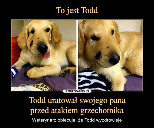 To jest Todd Todd uratował swojego pana przed atakiem grzechotnika