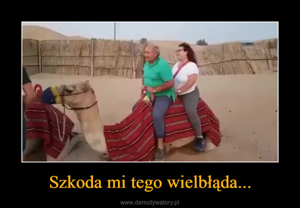 Szkoda mi tego wielbłąda... –