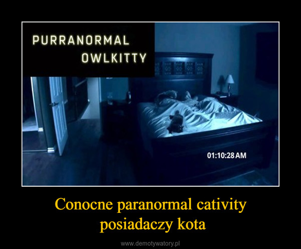 Conocne paranormal cativity posiadaczy kota –